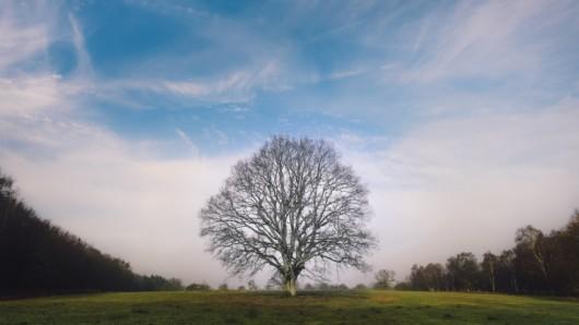 Top 24 najlepszych ekologicznych suszonek