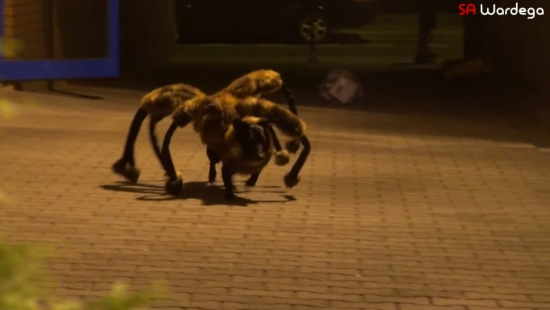 Mutant Giant Spider Dog Sylwestra Wardęgi światowym hitem YouTube!