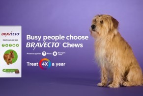 Busy People Choose Bravecto Chews