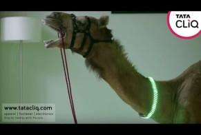 Tata: Camel