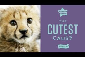 Tommee Tippee: The cutest cause