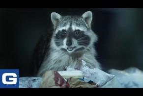 Raccoons, c'mon try it!
